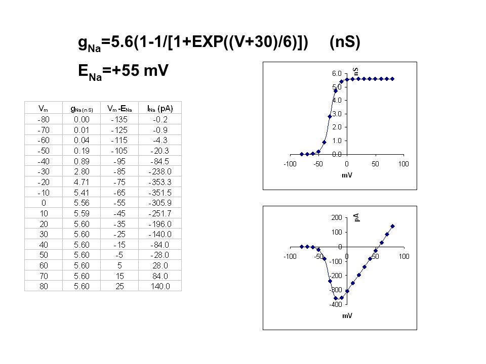 gNa=5.6(1-1/[1+EXP((V+30)/6)]) (nS)